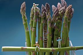 asparaguscrew